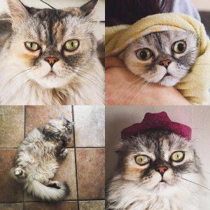 mrs-pocha-cat