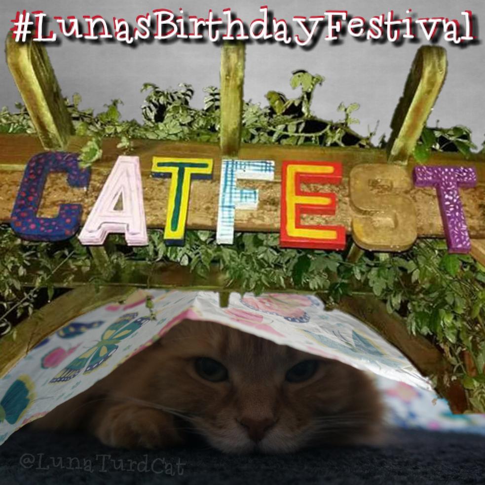lunasbirthdayfestival-catfest