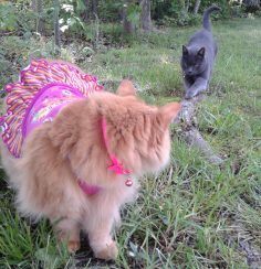 Sweet, it's Fashion Cat Friday!