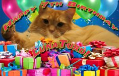 Happy 7th Birthday LunaTurd