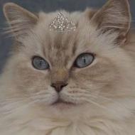 Queen.of.ragdolls