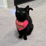 Maddiethehousepanther
